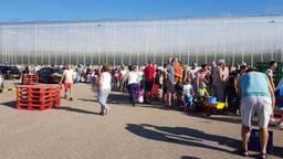 In de rij voor gratis tomaatjes.