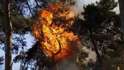 De brand woedt ook bovenin de bomen (foto: SK-Media).