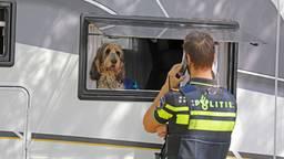 Deze hond wist te ontsnappen. (foto: FPMB Erik Haverhals)