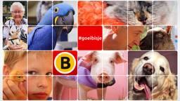Foto's: Flickr Omroep Brabant en Goei Volk