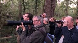 Herten spotten in het Groene Woud