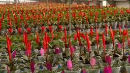 Camera's sorteren planten op hoogte, volume en kleur.