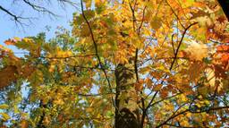 Het wordt prachtig herfstweer, volgens Tom van der Soek. (Foto: Martha Kivits)