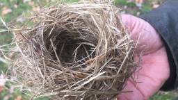 Het nestje van een dwergmuis.(Foto: Toine Cooymans)