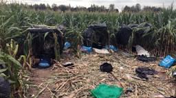 122 Albanezen werden dit jaar betrapt bij het maisveld in Moerdijk.
