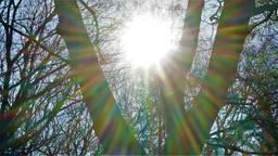 Het lijkt wel lente (foto: Toon Boons, Tilburg)