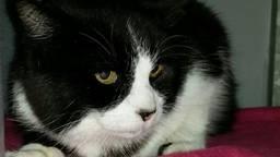 Kat Eu is na elf jaar weer teruggevonden.