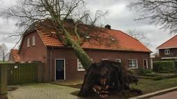 Boom kan de storm niet aan en valt op huis in Deurne (Foto: Martien van Dam/ SQVision).