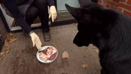 Hongerige hond Nicky krijgt een lekker bordje aangeboden door baasje Ingrid Smolders die kookles geeft aan hondenbezitters
