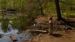 Kinderen proberen kikkers te vangen in de Oisterwijkse bossen en vennen.
