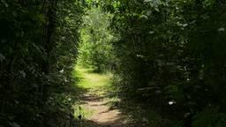 Via dit geheimzinnige paadje loop je naar het mysterieuze Duyls Bosje
