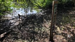Door de droogte zijn peilschalen in De Peel helemaal drooggevallen.