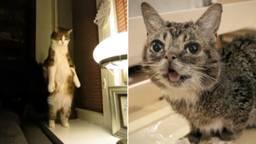 De kattenfilm duurt 70 minuten. (Foto: beelden uit de trailer van CatVideoFest 2019)