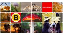 Omroep Brabant ontving vorig jaar duizenden inzendingen voor de Herfstfotowedstrijd.