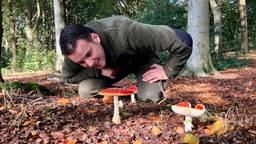 Laat de paddestoelen met rust zegt boswachter Erik de Jonge (Foto: Erik Peeters)