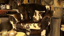 Een stoel bekleed met koeienhuiden