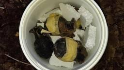 Een paar van de gevonden granaten. (Foto: Politie)