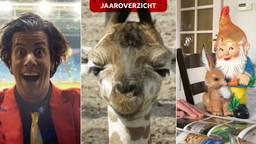Er viel ook genoeg te lachen in 2019. (Beeld: Omroep Brabant/Beekse Bergen)