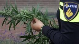 Wietplantje (foto: politie)