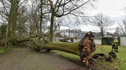 Bomen blokkeren de weg in Oisterwijk. (Foto: Toby de Kort / De Kort Media)