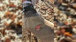Skye moest direct naar de dierenarts om te worden geopereerd.