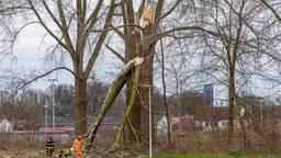 Boom kapot gewaaid op Goirkekanaaldijk Tilburg. Foto: Jack Brekelmans