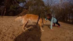 Woofcamp: Fit worden en tegelijkertijd je hond trainen.