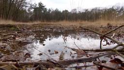 In Oisterwijk staan delen bos helemaal onder water.