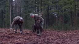 In het bos bij Sint Anthonis planten ze nieuwe bomen