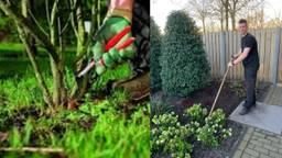 Het advies van hovenier Roel: extra snoeien om tuinplanten tegen nachtvorst te beschermen.