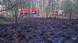 Ongeveer een halve hectare stond in brand. (Foto: SQ Vision mediaproducties)