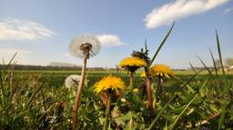 Een zomerse dag in Brabant (Foto: Ben Saanen).