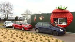 Lange rijen voor de aardbeien drive-in in Uden