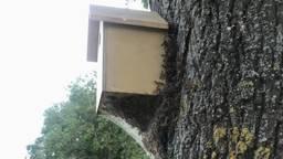 Processierupsennest tegen een nestkastje (foto: Max Moonen)