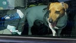 Een van de aangetroffen honden (foto: politie).