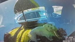De eigenaren van de hond hadden de ramen van hun auto enkele centimeters open gezet (foto: Facebook/Politie Tilburg).