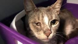 Een van de katten (foto: Dierenbescherming).