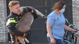 Dierenarts Carolien Buck als de hond wordt weggedragen (foto: Perry Roovers/SQ Vision).