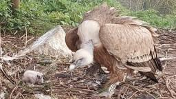 Het dier werd eerder deze maand geboren na een broedduur van vijftig dagen (foto: Dierenrijk).
