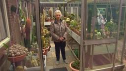 Betsie en haar cactussen (foto: Brabants Buske).
