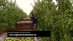 Brabantse fruittelers dreigen te blijven zitten met grote overschotten