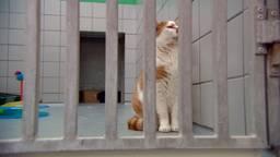 Dierenopvang Eindhoven zit tjokvol: baasjes gezocht voor katten
