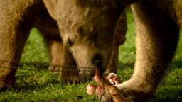Feestelijk kerstmaal voor dieren in Dierenrijk Nuenen: kuikentjes voor de ooievaars, ijsblokken voor de ijsberen