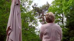 'Poesje, kom eens uit die boom!' Kat zit al anderhalve week vast in boom in Oisterwijk