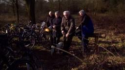 De wisent is weer in Brabant