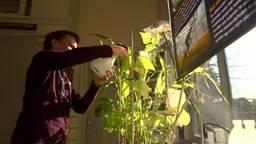 """'Ik ben vooral trots op m'n bonen"""". Scholier uit Zevenbergen kan voedsel laten groeien op Mars"""