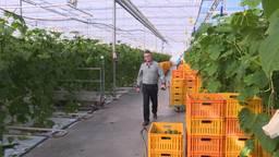 Boeren en versproducenten in Roosendaal beginnen eigen winkel
