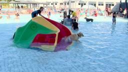 honden voor het laatst in zwembad de Tongelreep