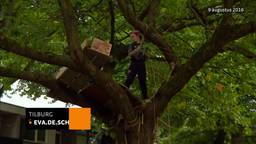 De buurt en de burgemeester zijn het eens over een nieuwe boomhut in Tilburg