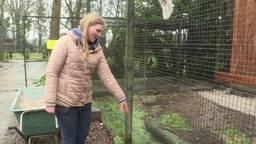 Zoo Veldhoven net open en de eerste kaketoes zijn al gestolen